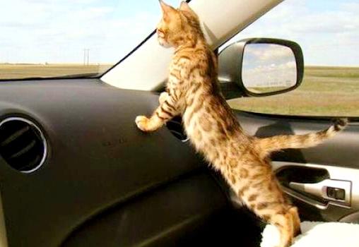Viaggiare in auto cleofe finati1